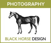 Black Horse Design Photography (North Wales Horse)