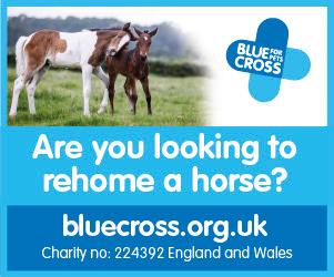 Blue Cross 2020 B (North Wales Horse)