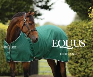 Equus (North Wales Horse)